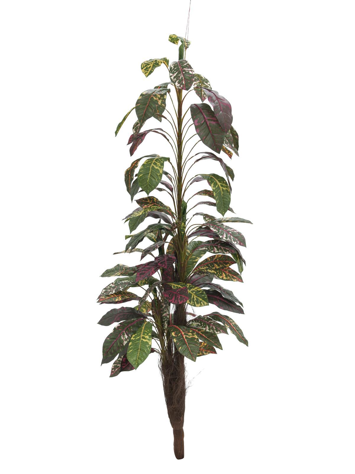 Billede af Kunstig Croton med Kokusnød stamme 180cm