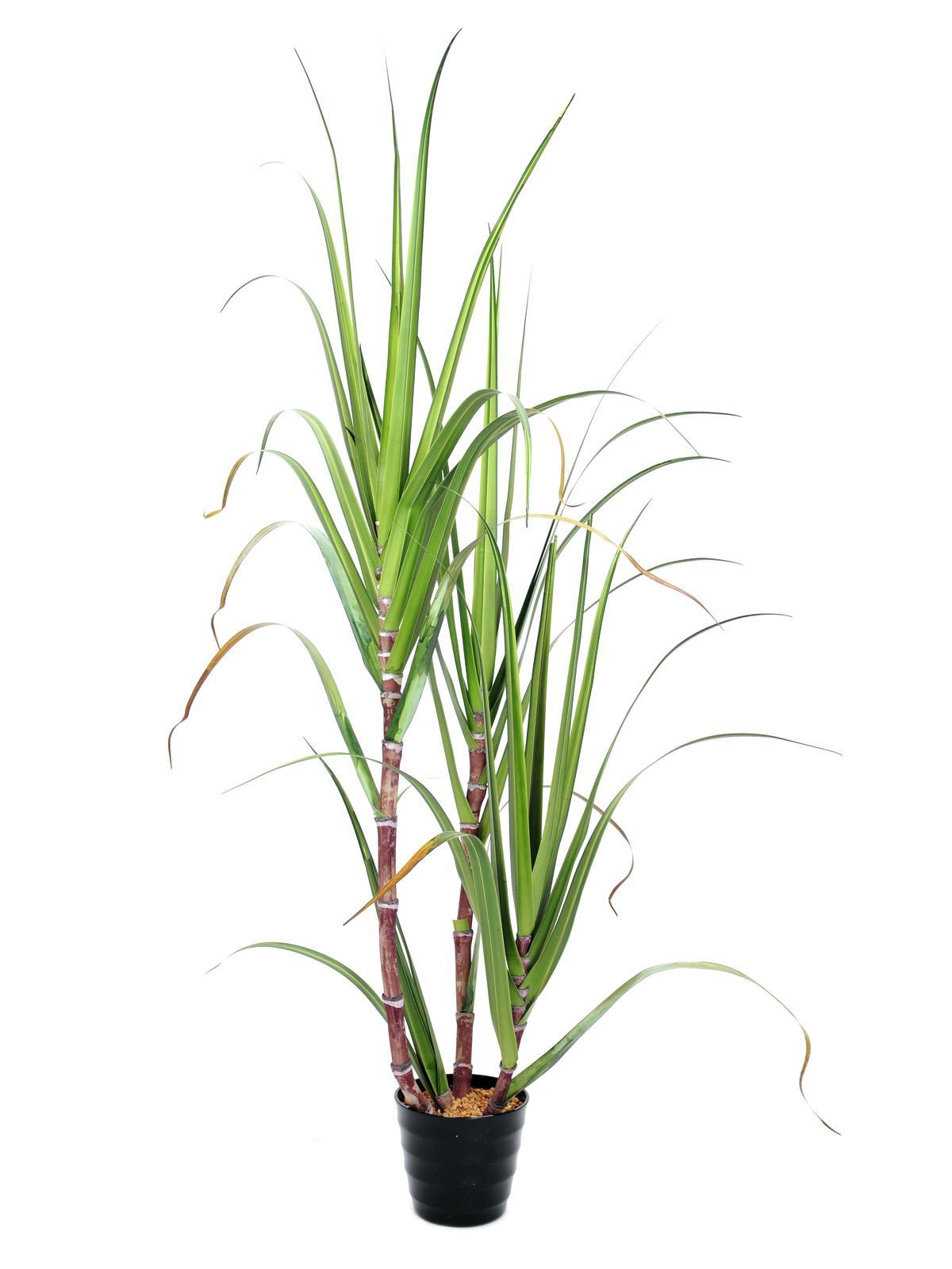 Image of   Kunstig Sukkerrør i sæt, 170 cm