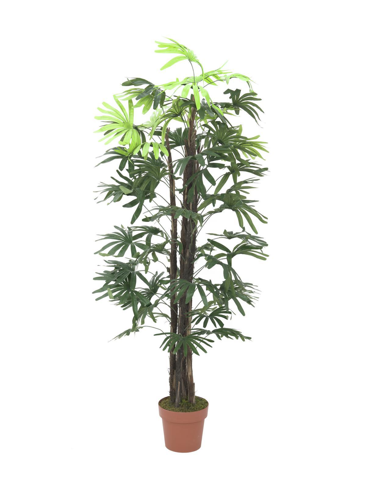 Image of   Kunstig Raphis Palmetræ, 150cm
