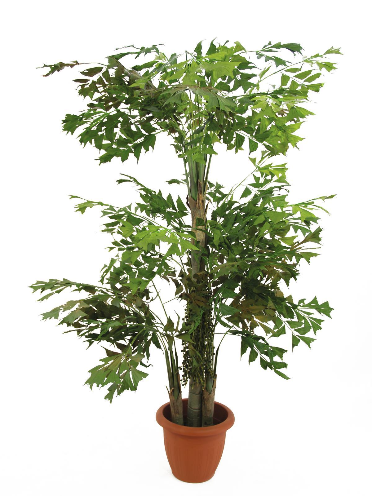 Billede af Kunstig Fiskehale busk, 380 cm