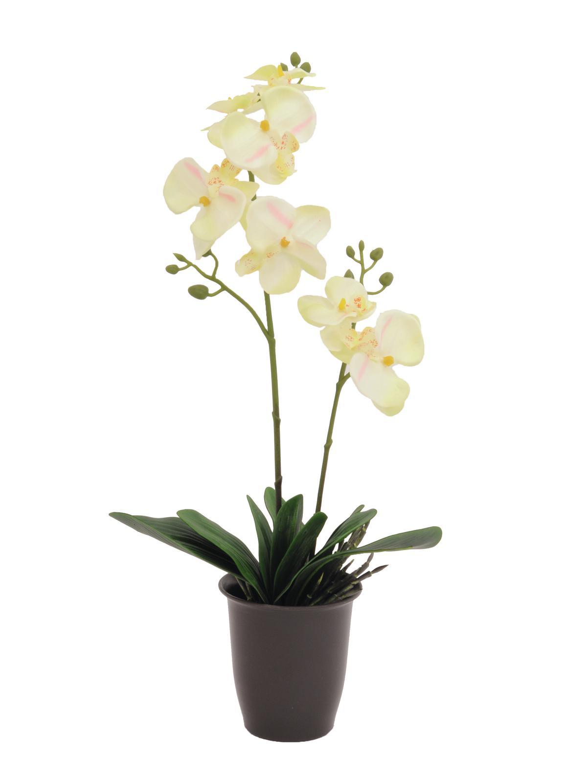 Billede af Kunstig Orchid, cream, 57cm