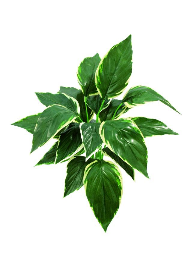 Billede af Kunstig Hosta, green-white, 51cm