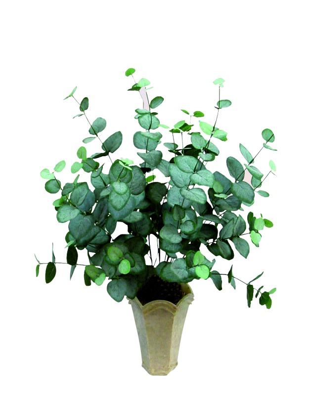 Billede af Kunstig Eucalyptus-bush, 50 cm