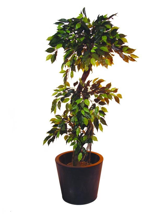 Billede af Kunstig Ficus Forest Tree, 150cm