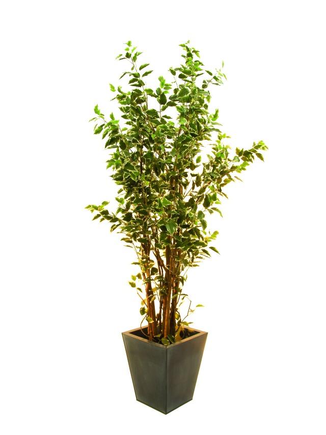 Billede af Kunstig Ficus tree deluxe, 210cm