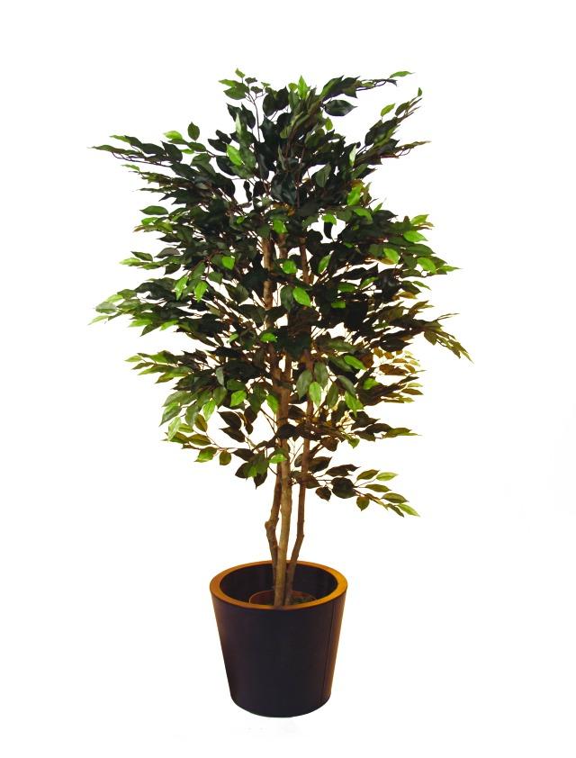 Billede af Kunstig Ficus open leaves, 180cm