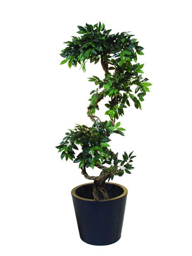 Billede af Kunstig Ficus spiral trunk, 160cm