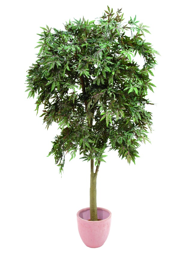 Billede af Kunstig Asketræ m. ahorn, grøn, 220 cm