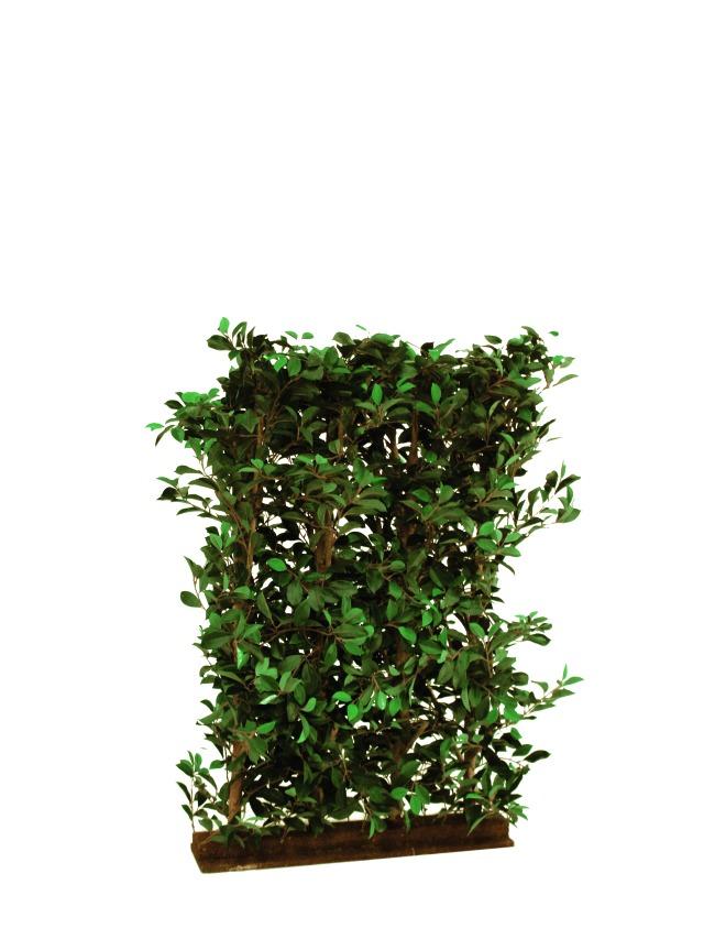 Billede af Kunstig Ficus Hedge, 90x130cm
