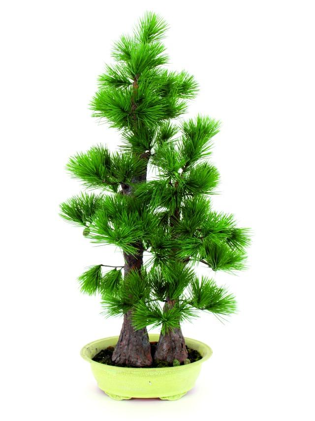 Billede af Kunstig Pine bonsai, 95cm