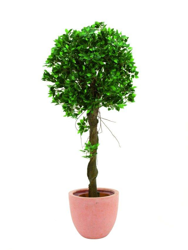 Billede af Kunstig Ficus balltree, 100cm
