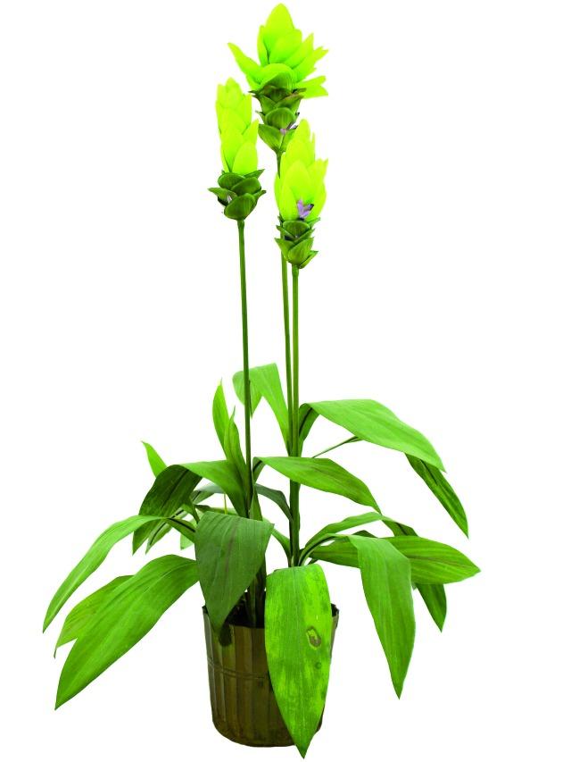 Billede af Kunstig Gingerlily, 95cm