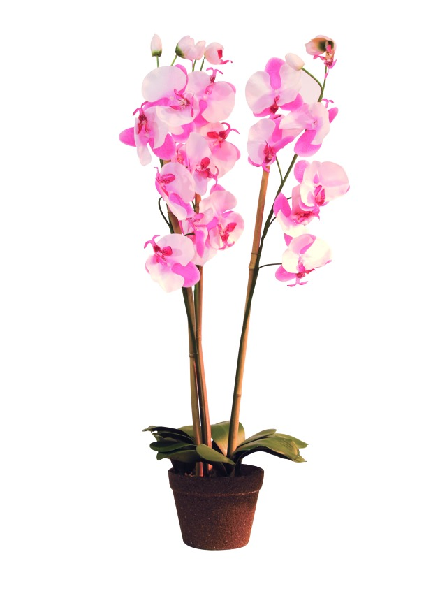 Billede af Kunstig Orchid, rose, 80cm