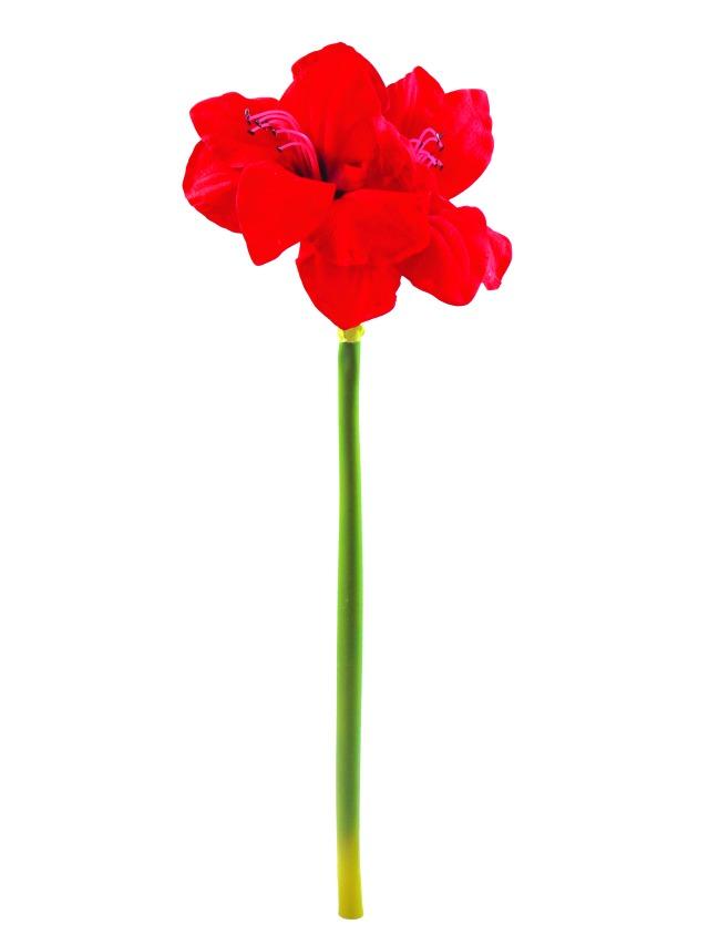 Billede af Kunstig Amaryllisgren, rød, 72cm