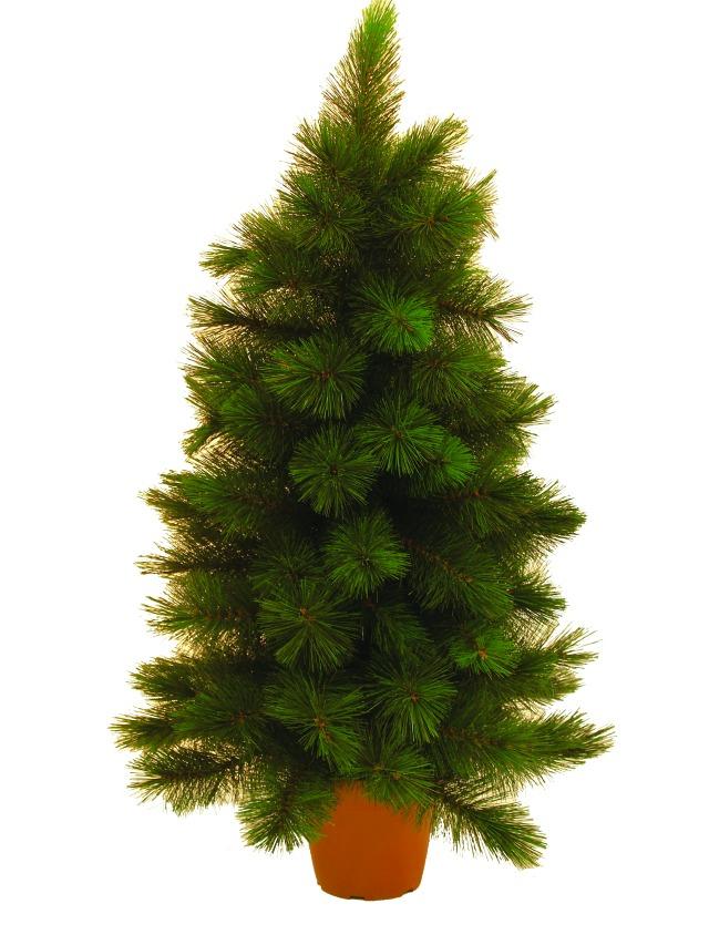 Billede af Mini fir tree, 90cm