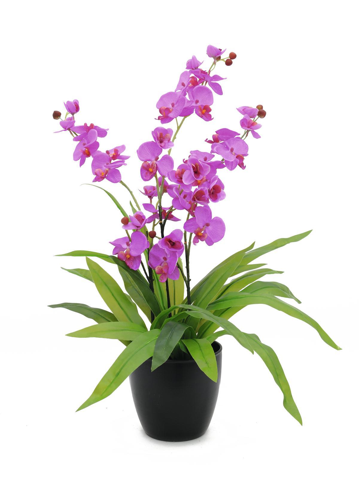 Billede af Kunstig Orchid, purple, 80cm