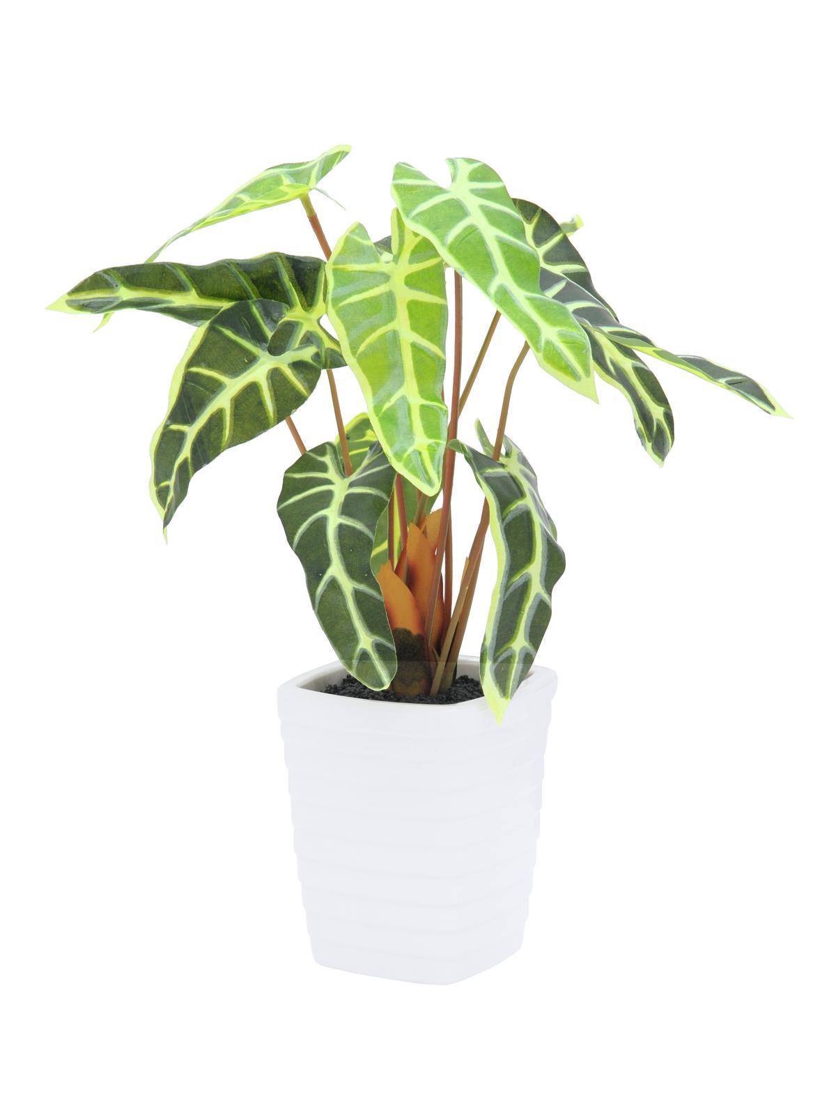 Billede af Kunstig Caladiumplant, white-green, 35cm